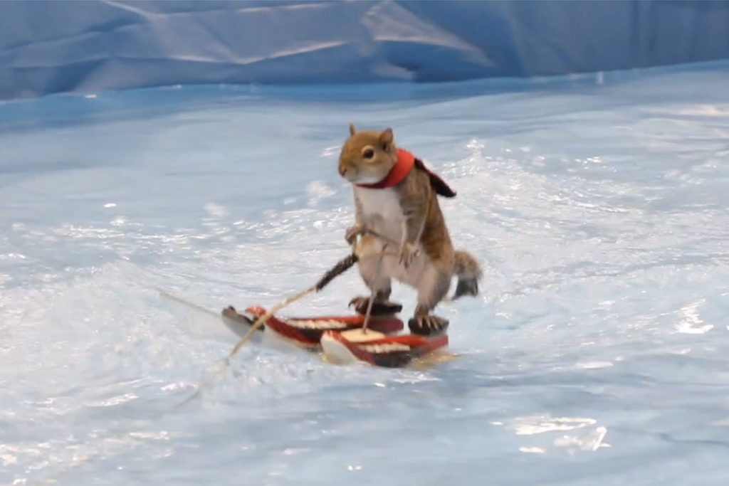 Twiggy the waterskiing squirrel entertains crowds at the Progressive Cleveland Boat Show. (David Petkiewicz, cleveland.com)