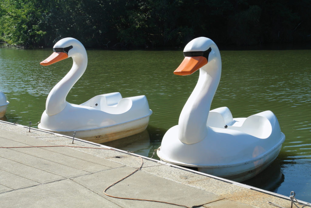 A couple of swan pedal boats lined up at the dock.